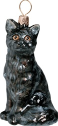 American Shorthair Cat - Black