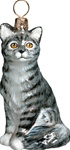 American Shorthair Cat  Gray