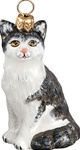 American Shorthair Cat Gray and White