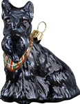 Scottish Terrier with Bandana