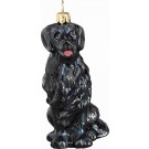 Flat-coated Retriever, Black